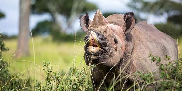 Imire Rhino Conservation